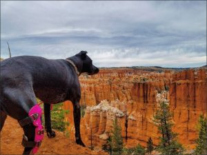 Am I done with this thing yet? —Weaning your dog from your My Pet's Brace Knee Brace 2