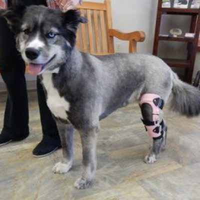 How to Groom a Dog with a Brace