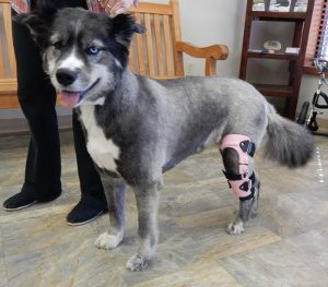 How to Groom a Dog with a Brace 1