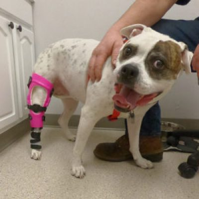 The Big Day Has Arrived – Brace Delivery at a My Pet's Brace Facility