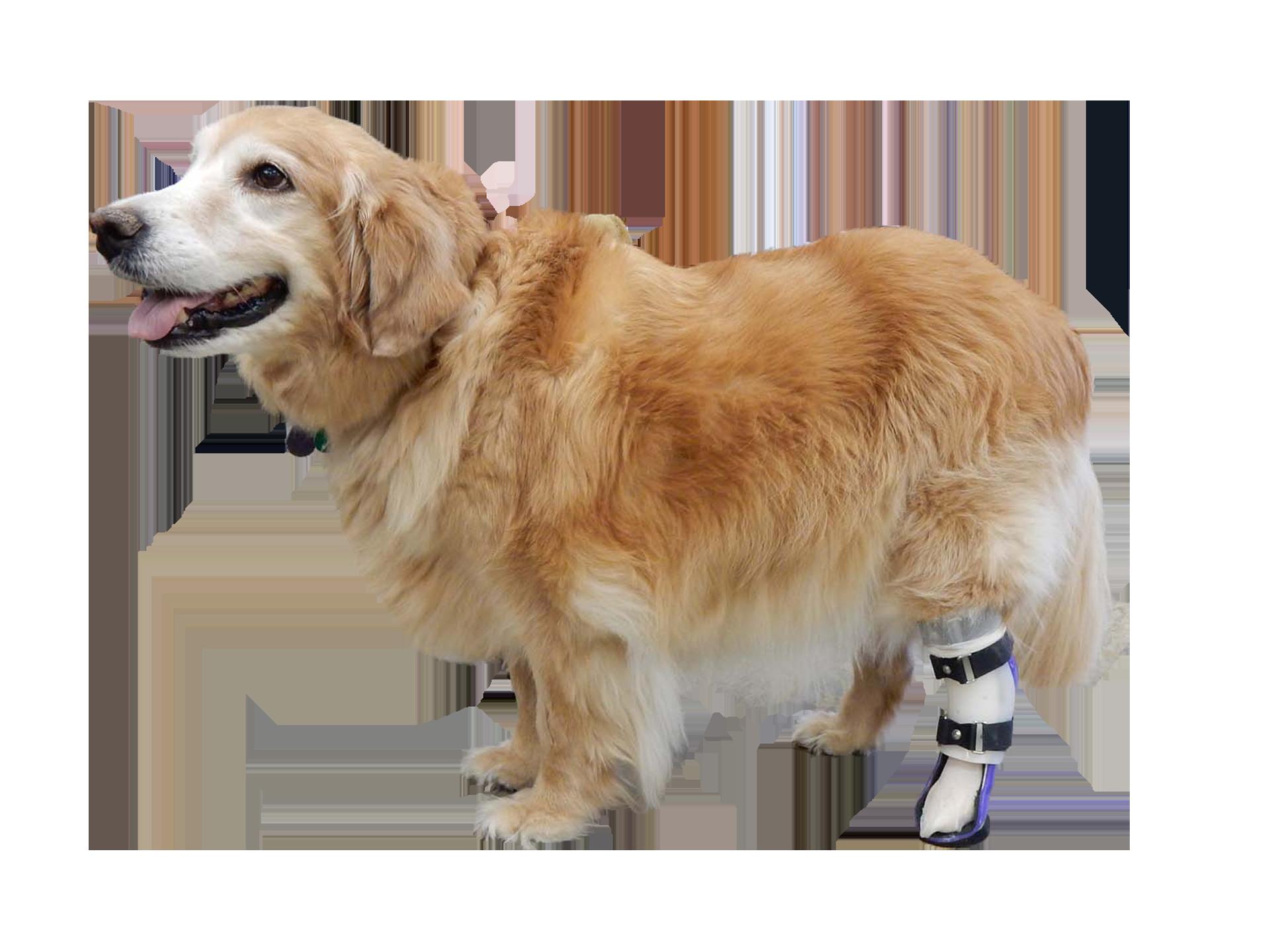 Hock Braces for Rear Legs 3