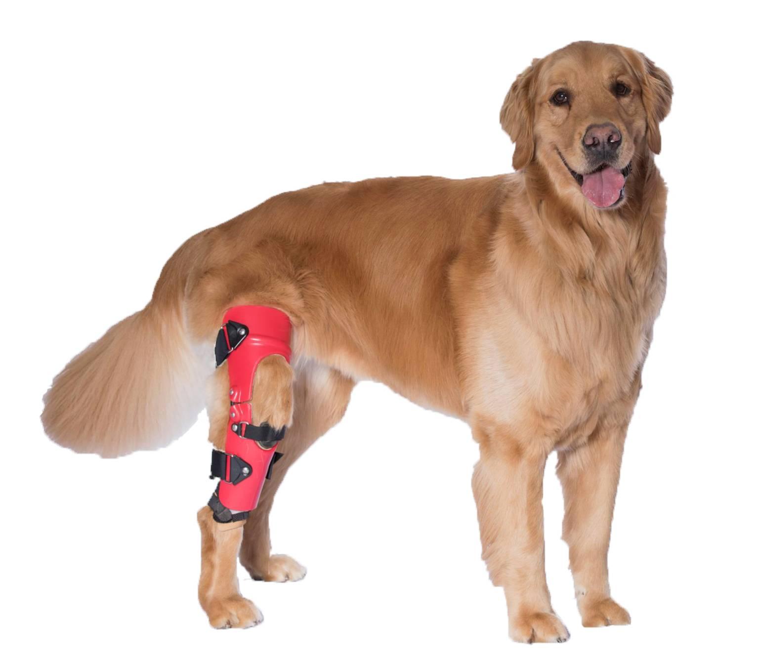 Knee Braces for Rear Legs 1