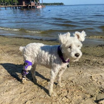 What To Do With Your Dog's Leg Brace While On Vacation